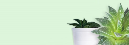 Foliage Plants Collection
