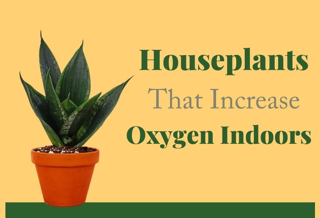 Houseplants To Increase Oxygen Indoors