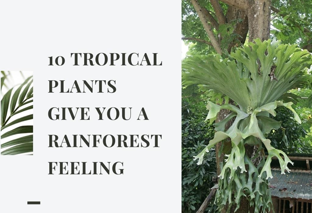 tropical plants rainforest